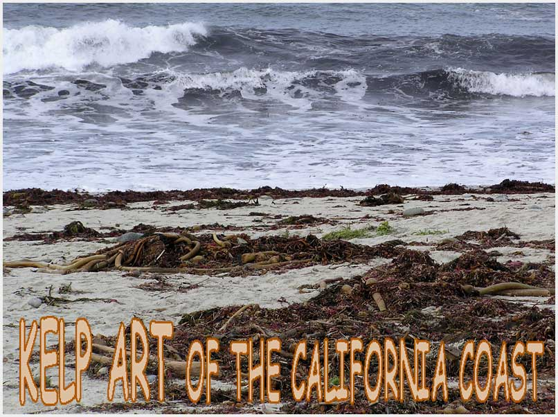 photo gallery : kelp art of the California coast